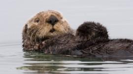 Otter High Quality Wallpaper