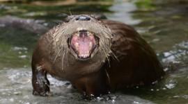Otter Wallpaper 1080p