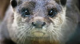Otter Wallpaper Background