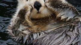 Otter Wallpaper For IPhone 6