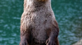 Otter Wallpaper For IPhone Download