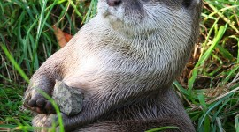 Otter Wallpaper For IPhone Free