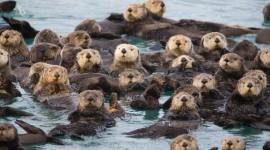 Otter Wallpaper Gallery