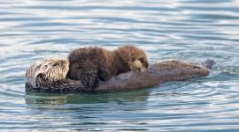 Otter Wallpaper High Definition