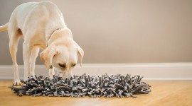 Snuffle Wallpaper High Definition