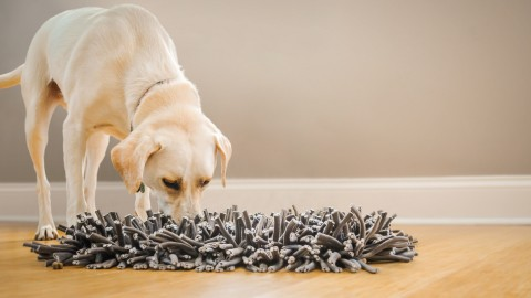 Snuffle wallpapers high quality