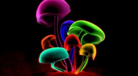 The Mushrooms Glow Aircraft Picture