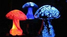 The Mushrooms Glow Photo