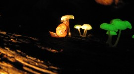 The Mushrooms Glow Wallpaper Free