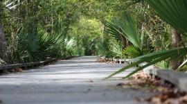 Trail Through The Swamp Desktop Wallpaper