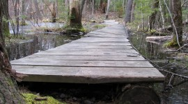 Trail Through The Swamp Desktop Wallpaper HD