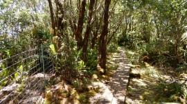 Trail Through The Swamp Wallpaper 1080p