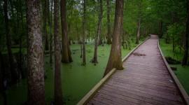 Trail Through The Swamp Wallpaper
