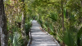 Trail Through The Swamp Wallpaper Download