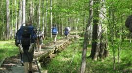 Trail Through The Swamp Wallpaper For Desktop