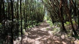 Trail Through The Swamp Wallpaper Free