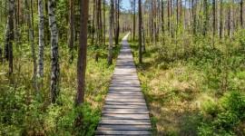 Trail Through The Swamp Wallpaper Full HD