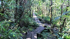 Trail Through The Swamp Wallpaper Gallery