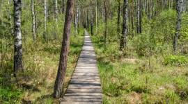 Trail Through The Swamp Wallpaper HD