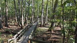Trail Through The Swamp Wallpaper HQ