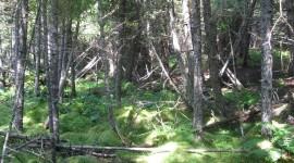 Trail Through The Swamp Wallpaper High Definition