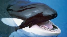 Whale Teeth Wallpaper Free