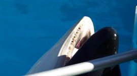 Whale Teeth Wallpaper HD