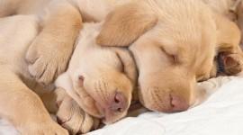 4K Puppy Sleeping Photo