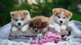 4K Puppy Sleeping Photo Free