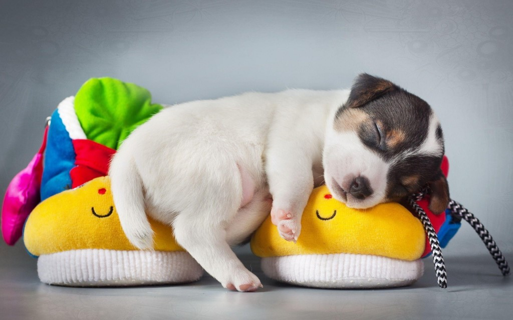 4K Puppy Sleeping wallpapers HD