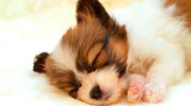 4K Puppy Sleeping Wallpaper Free
