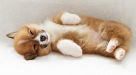 4K Puppy Sleeping Wallpaper Gallery