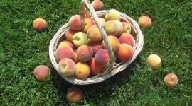 Basket With Peaches Desktop Wallpaper HD