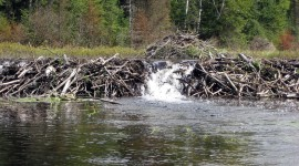 Beaver Dams High Quality Wallpaper