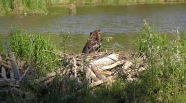 Beaver Dams Wallpaper 1080p