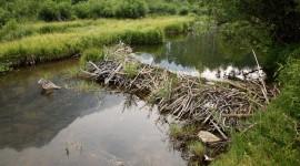 Beaver Dams Wallpaper Download Free