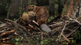 Beaver Dams Wallpaper For PC