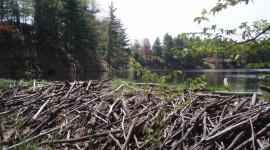 Beaver Dams Wallpaper Free