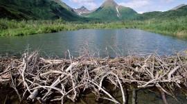 Beaver Dams Wallpaper High Definition