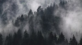 Fog In The Forest Best Wallpaper