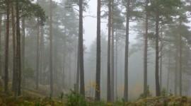 Fog In The Forest Desktop Wallpaper For PC