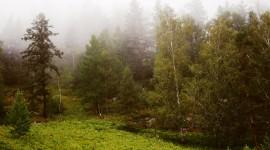 Fog In The Forest Desktop Wallpaper Free