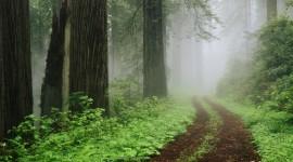 Fog In The Forest Desktop Wallpaper HD