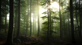 Fog In The Forest Desktop Wallpaper HQ