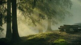 Fog In The Forest High Quality Wallpaper