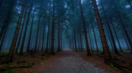 Fog In The Forest Wallpaper 1080p