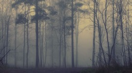 Fog In The Forest Wallpaper