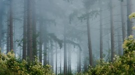 Fog In The Forest Wallpaper Background