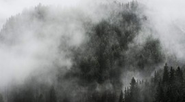 Fog In The Forest Wallpaper Download Free