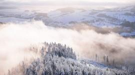 Fog In The Forest Wallpaper For Desktop